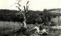 В.М. Васнецов. Гонец. 1881 г. Х., м. Собрание Г.П. Белякова.